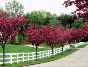 incorporating-a-fence-in-your-yard-300x228